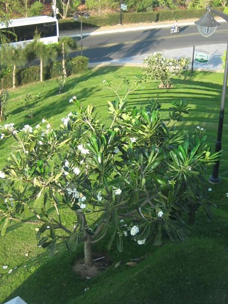 вид с террасы на цветущие деревья