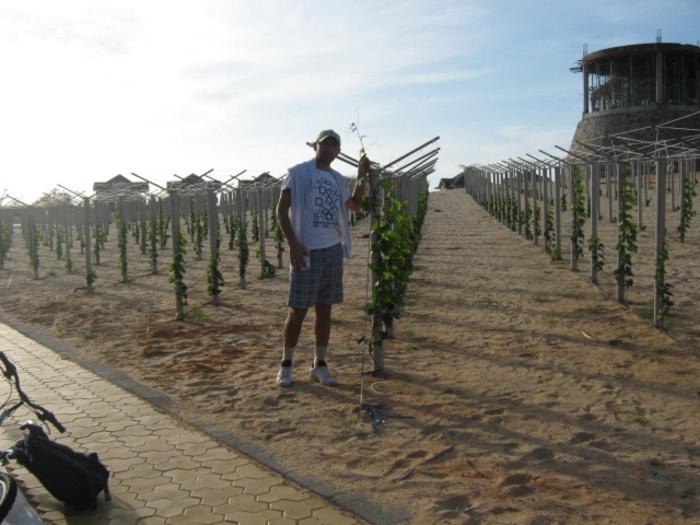 Виноградник 3