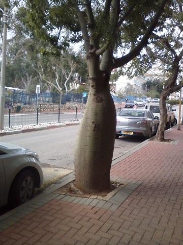 Дерево защита от бури 2015