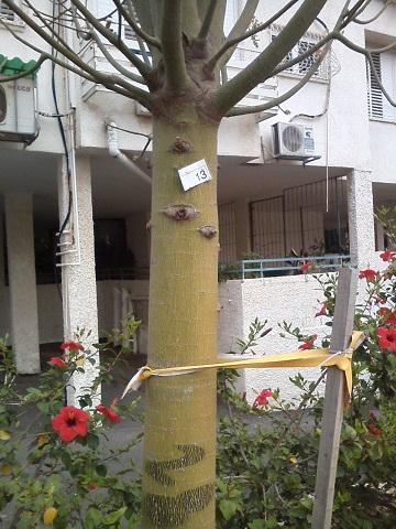 Реховот все деревья в городе пронумеровали этому не повезло