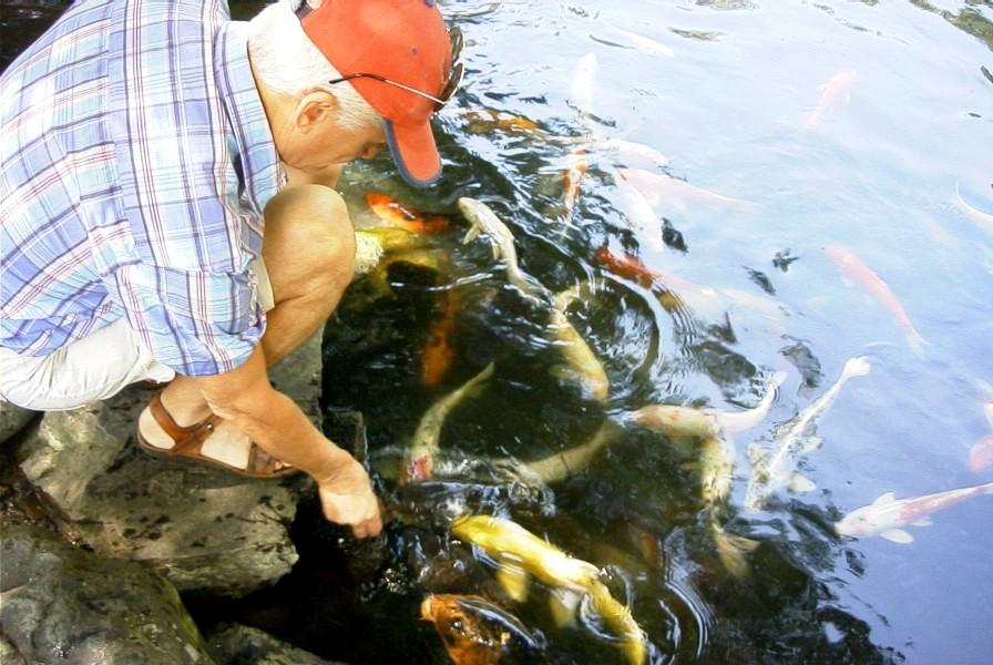 LPYfeedingFish