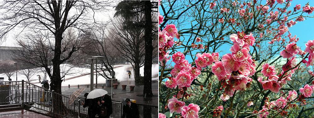 Snow&Flowers