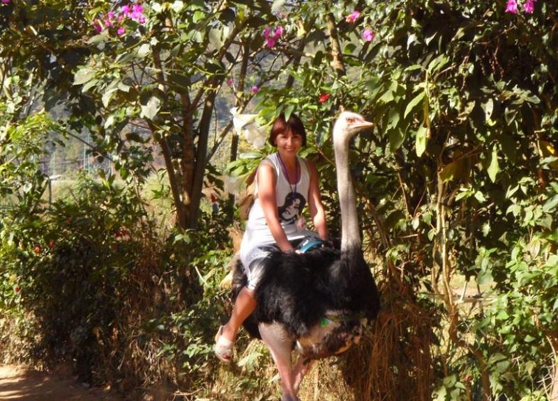На страусе