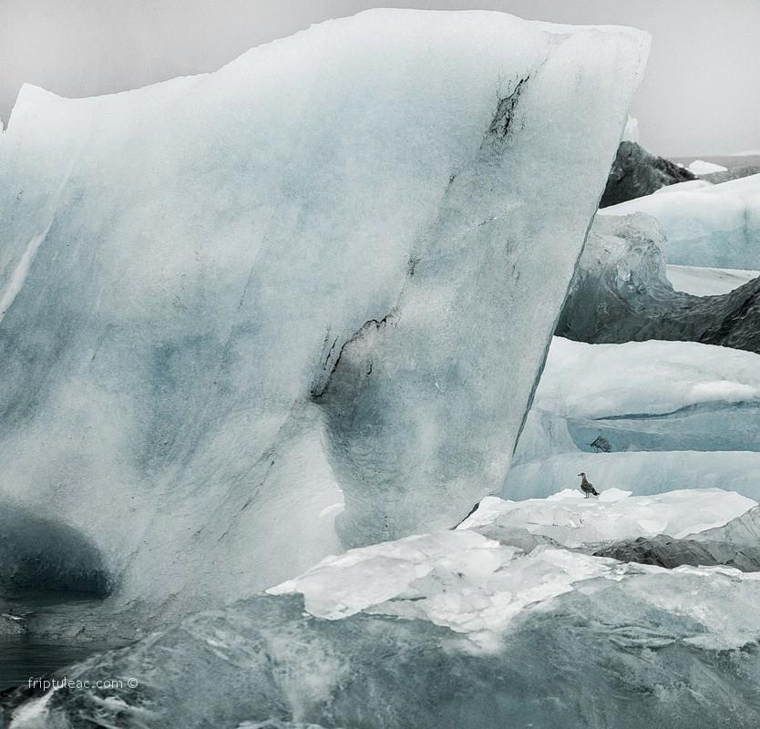 iceland-5596
