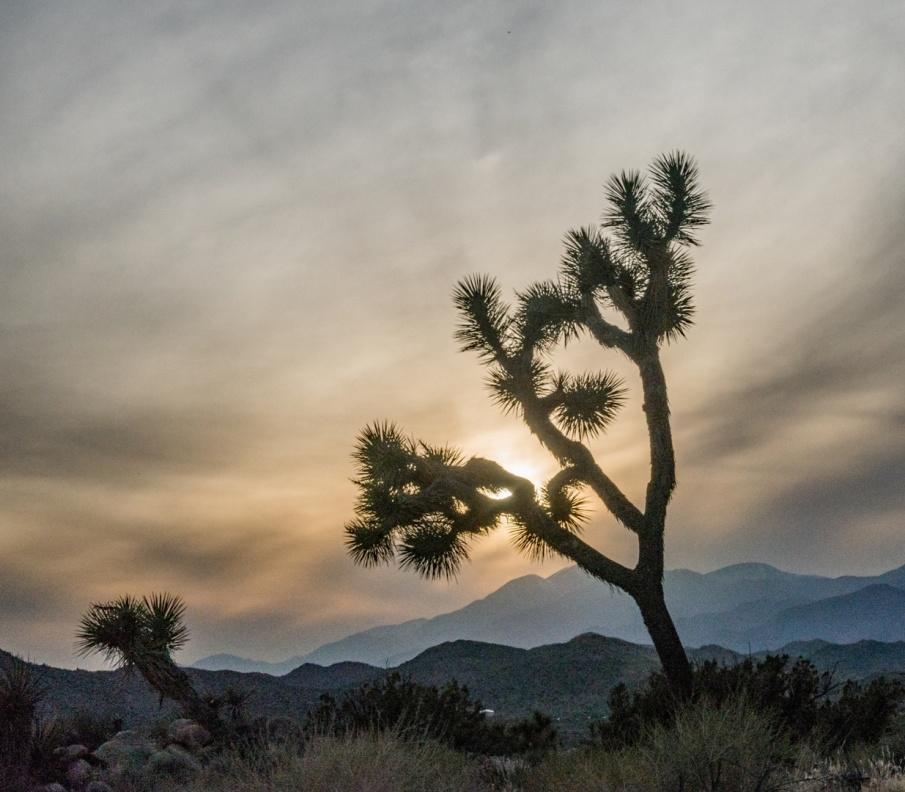 C:\Users\Russ\Desktop\Photos 2015-2018\Apr 2018 Joshua Tree\Joshua Tree 2018 Apr JPG SEL\Joshua Tree WEB\DSC06860.jpg