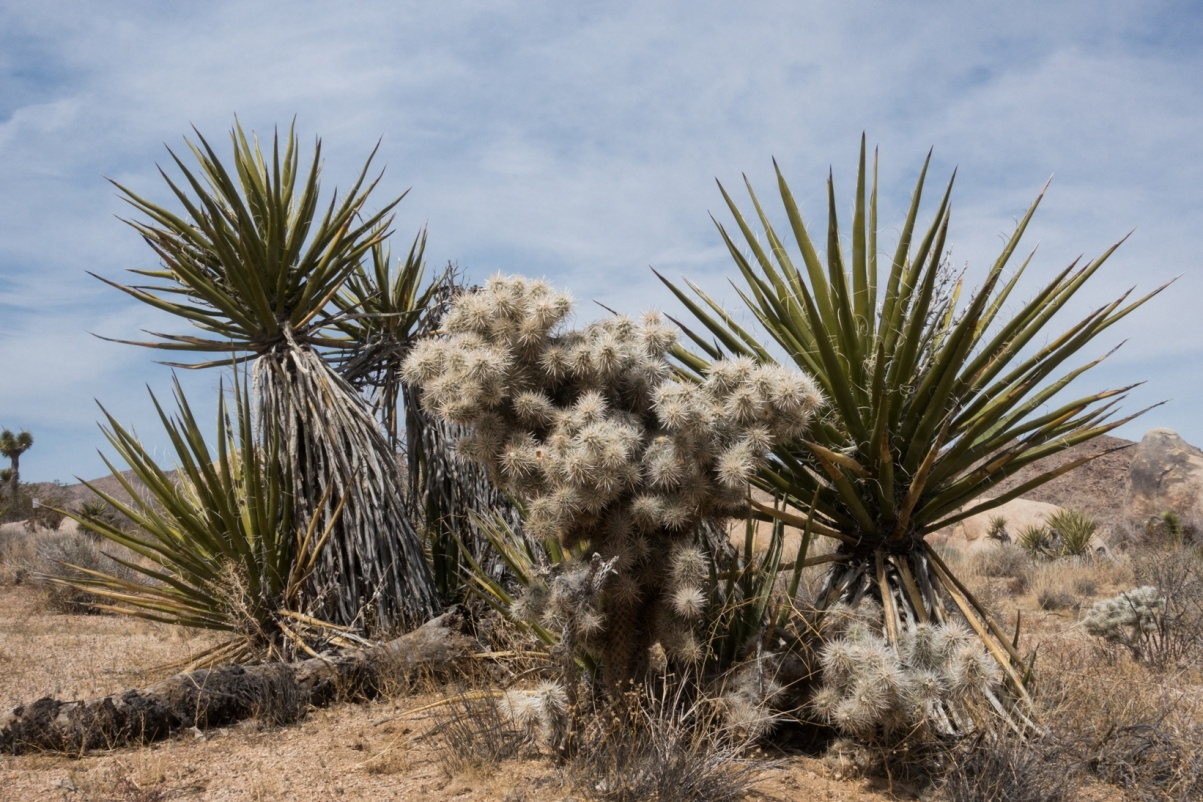 C:\Users\Russ\Desktop\Photos 2015-2018\Apr 2018 Joshua Tree\Joshua Tree 2018 Apr JPG SEL\Joshua Tree WEB\DSC06904.jpg