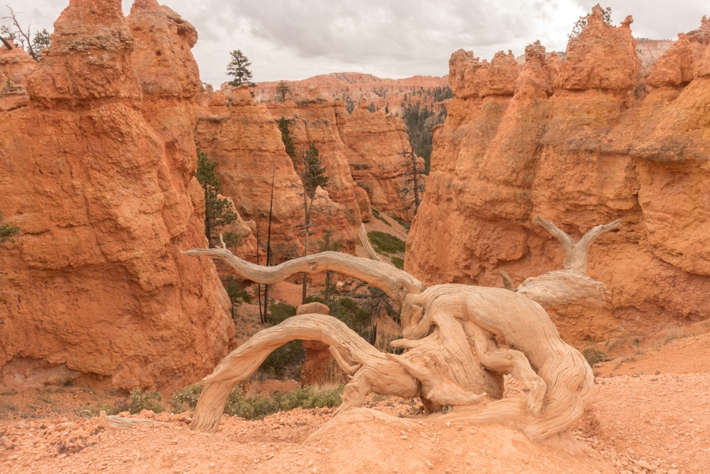 C:\Users\Russ\Desktop\2015-2019 Photos\2016 Canyons journey\Processed JPG\Bryce Canyon\DSC02525.jpg