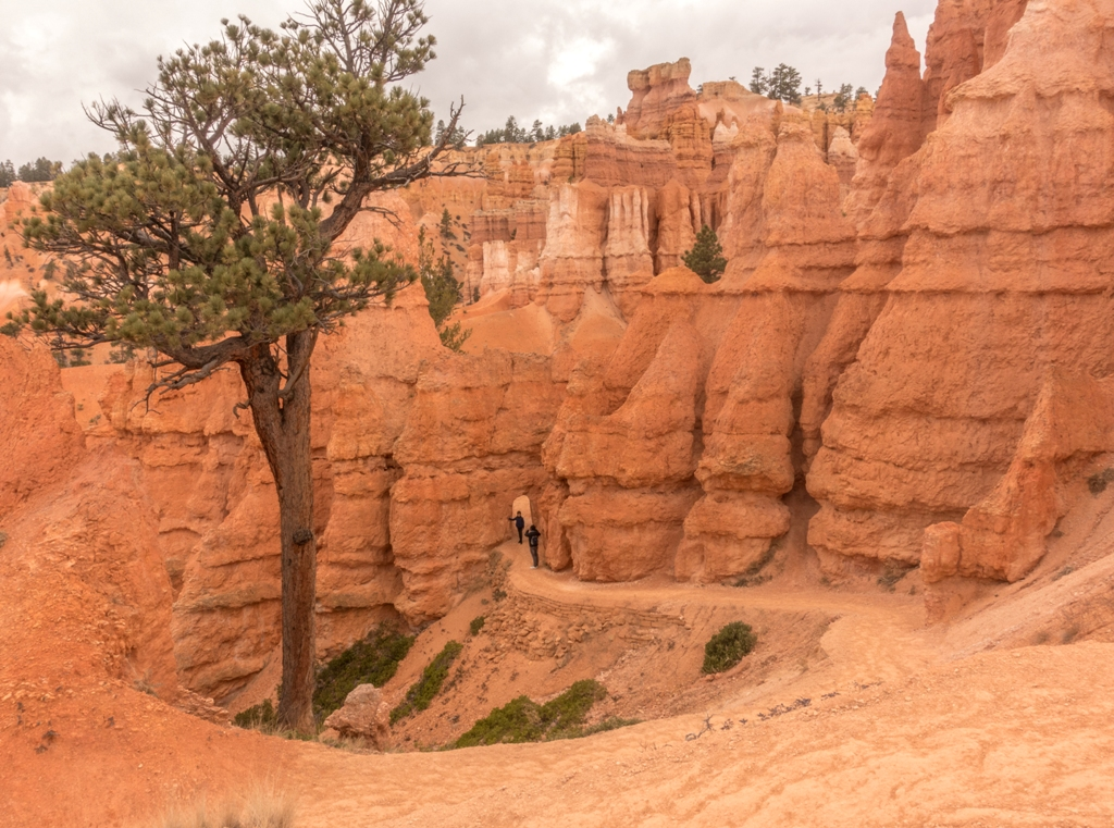 C:\Users\Russ\Desktop\2015-2019 Photos\2016 Canyons journey\Processed JPG\Bryce Canyon\DSC02513.jpg