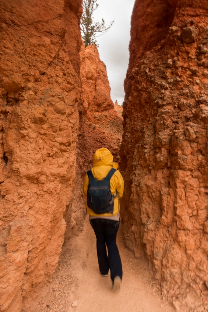 C:\Users\Russ\Desktop\2015-2019 Photos\2016 Canyons journey\Processed JPG\Bryce Canyon\DSC02543.jpg