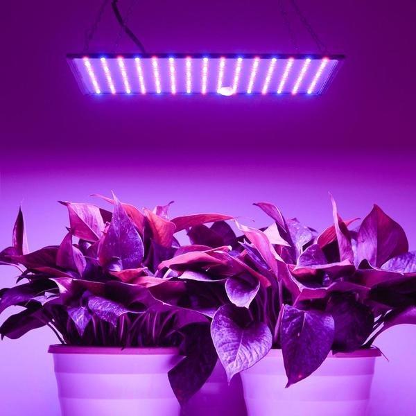 Такой разный ультрафиолет: загар, подсветка для растений и мёртвые бактерии. Обзор УФ-ламп разного типа